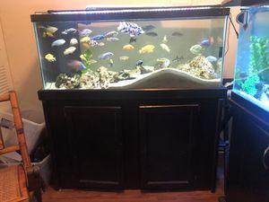 75 gallon Fish Tank for Sale in Winter Park, FL