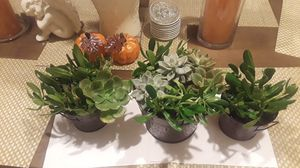 Succulents plants for Sale in Anaheim, CA