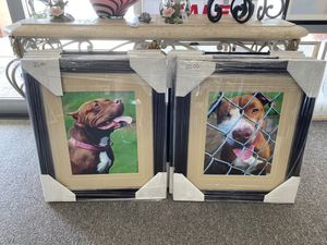 Dog with collar for Sale in Altamonte Springs, FL