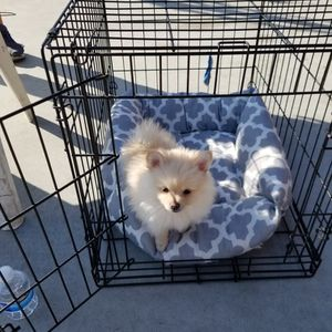 Small Cage for Sale in Madera, CA