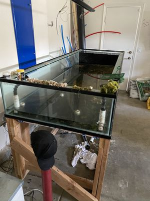 Frag tank aquarium FREEEEEEEEEEE for Sale in Lake Elsinore, CA