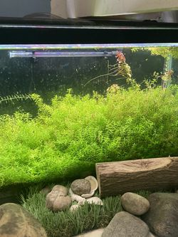 10 Gallon Fresh Water Aquarium for Sale in Diamond Bar,  CA