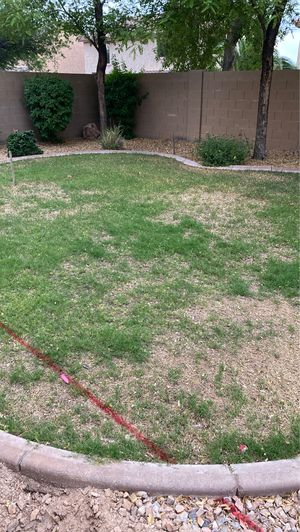 Free cribbing Araña grass area rock whatever it's free if you want it for Sale in Peoria, AZ