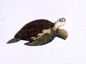Sea Turtle hand carved from palm tree frond for Sale in Fort Pierce, FL