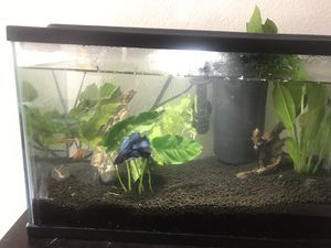 5 Galon fish tank for Sale in Artesia, CA