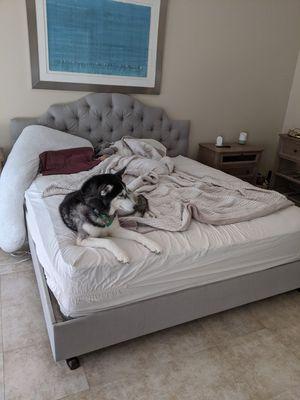 King Bed Frame (dog not included) for Sale in Westlake, MD