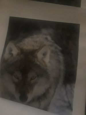 Wolf posters (wall) for Sale in Detroit, MI