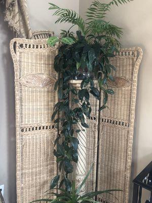 Plants for Sale in Croydon, PA