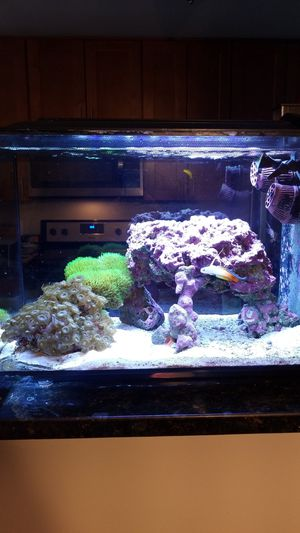 Aquarium saltwater complete 13.5 gallon for Sale in Alexandria, VA
