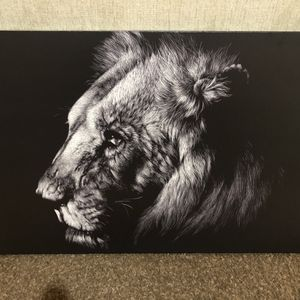 Brand new Lion Canvas Picture 36 X 24 for Sale in Las Vegas, NV