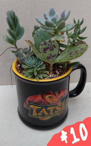 (Orange) Succulent Assortment In a Coffee Mug for Sale in Orange, CA