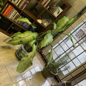 Large Foliage and Ceramic Pot for Sale in Washington, DC