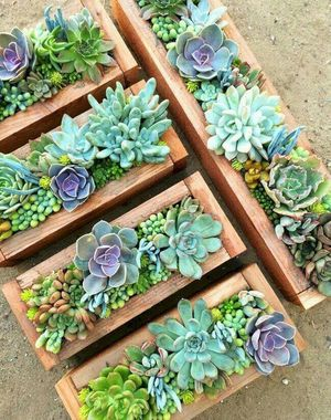 Succulent Centerpieces for Gifts or Events for Sale in Pico Rivera, CA