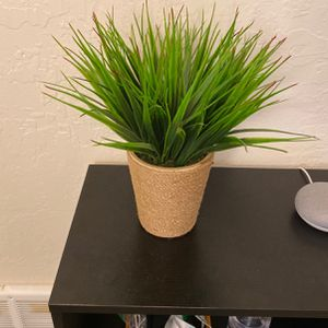 Artificial / Fake Green Grass Plant for Sale in Pleasant Hill, CA