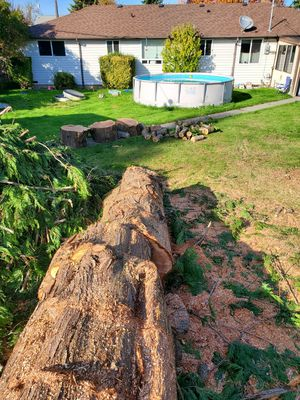 Wood\debris removal for Sale in Tacoma, WA