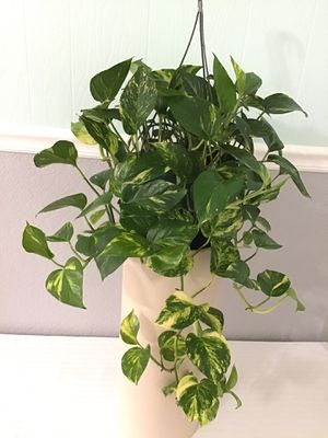 House Plants for Sale in Acworth, GA