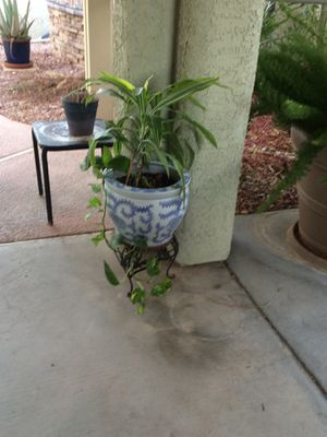 12-inch Ceramic Flower Pot w/ Cane Plant & Ivy for Sale in Las Vegas, NV