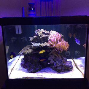 50 Gallon Reef Ready Cube Fish Tank for Sale in Elgin, IL