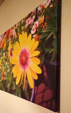 24x36 Canvas Art for Sale in Avondale, AZ