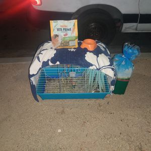 Guinea pig family for Sale in Long Beach, CA