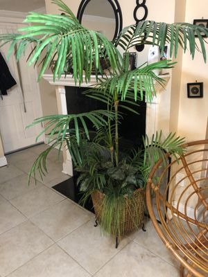 House plant for Sale in Westwood, MA