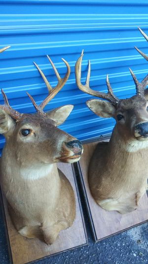 Real deer head for sale for Sale in Austin, TX