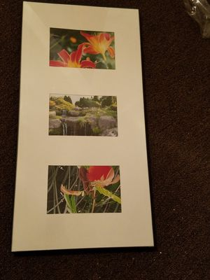 (3) 4x6 framed photos at Olbrich Gardens for Sale in Peoria, IL