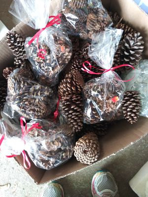 Box of pincones for Sale in Raleigh, NC
