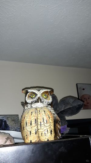 owl for Sale in Cartersville, VA