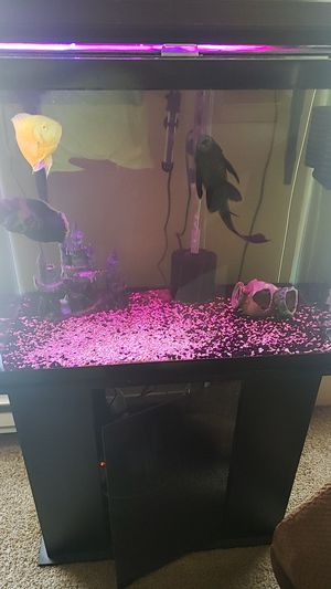 Fish Tank for Sale in Fort Wayne, IN
