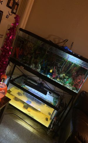 Fish tank and stand for Sale in Boston, MA