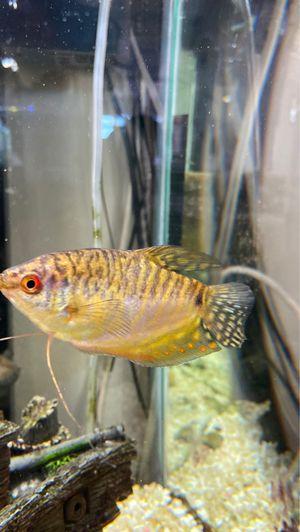 Fish for Sale in Vista, CA