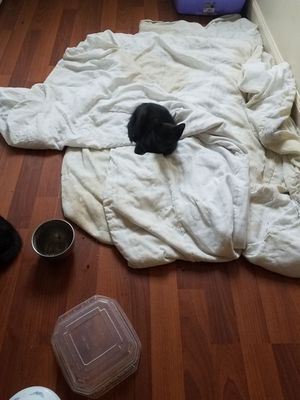 8 Kittens they are FREE. for Sale in Fort Defiance, VA