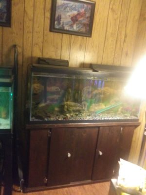 Nice 55 gal tank stand everything you need for Sale in Elma, WA