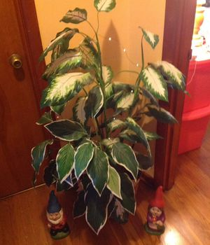 4 ft plant in basket with 2 nomes and fairy lights. for Sale in Winchester, KY