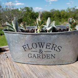 Succulent arrangement for Sale in Lake Wales,  FL