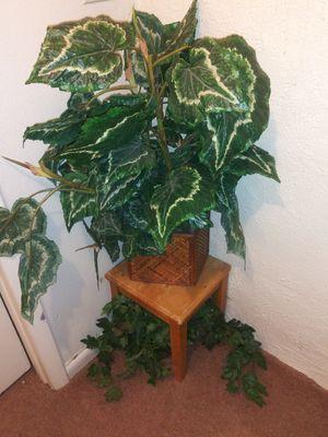 Fake plants for Sale in Denver, CO