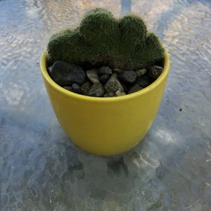 Cactus Plant for Sale in Bloomington, CA