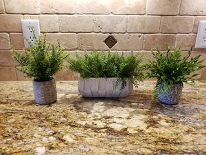 Set of three plants for Sale in Albuquerque, NM