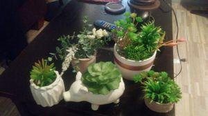 Succulents for Sale in Tempe, AZ