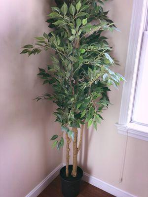 Artificial Plant for Sale in Abington, MA