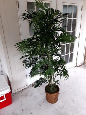 tree plant for Sale in Tampa, FL