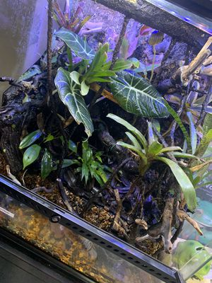 VIVARIUMS/TERRARIUMS CUSTOM BACKGROUND FOR REPTILES BIOACTIVE for Sale in Aliso Viejo, CA