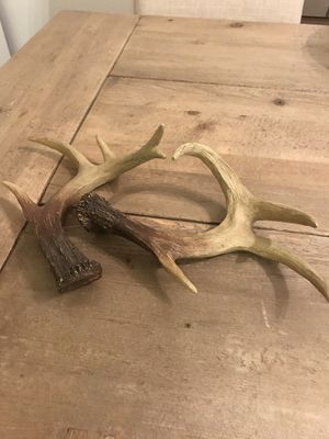 Realistic Looking Faux Fallow Deer antler Decor Set of 2 for Sale in Newport Beach, CA