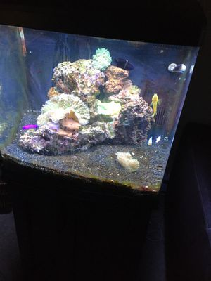 32 g Bio Cube with stand good condition. for Sale in Seattle, WA