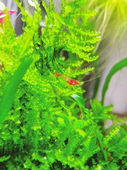 Red Rili Freshwater Aquarium Cleaners for Sale in Portland,  OR