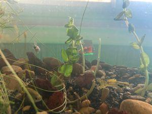 Aquarium plants and fish tank! for Sale in Grand Prairie, TX