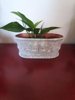 Beautiful Cherub planter for Sale in Aurora, IL