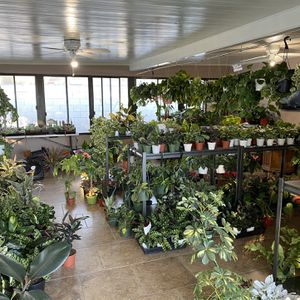 Plant Sale 10%-15% Off for Sale in Rancho Cucamonga, CA