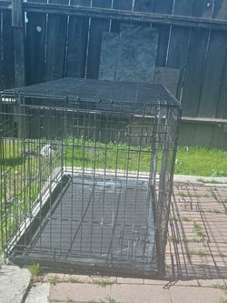 Dog for Sale in Stockton,  CA